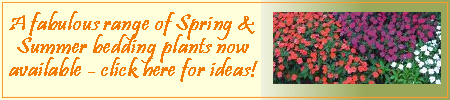 Spring and summer bedding plants